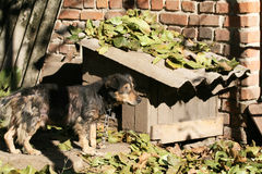 Dog near the kennel Stock Photography