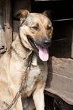 Dog near a kennel Stock Photo
