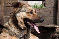 Dog near a kennel Stock Photos