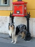 The dog near the mailbox Royalty Free Stock Images