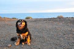 Dog near the Ocean Stock Photo