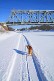 Dog near railway bridge Royalty Free Stock Images