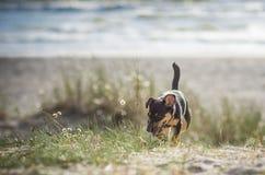 Dog near the sea Stock Photo