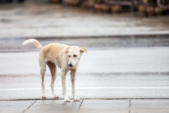 Dog near street Stock Photography