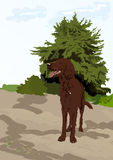 Dog near the tree Royalty Free Stock Image