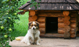 Dog near wake. Lonely dog watching out near his doghouse Royalty Free Stock Photo