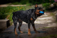 Dog near the water royalty free stock images