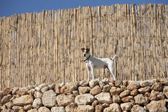 A dog near wooden fence Royalty Free Stock Image