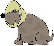 Dog with a neck cone. This illustration depicts a brown dog with a neck cone Stock Image