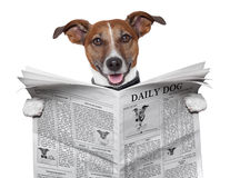 Dog newspaper. Dog reading and holding a  newspaper