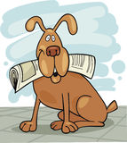 Dog with newspaper Stock Image