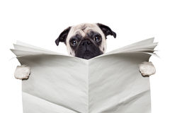 Dog newspaper Royalty Free Stock Images