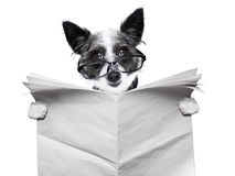 Dog newspaper Stock Image