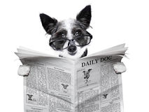 Dog newspaper Stock Images