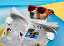 Dog newspaper reading Stock Images