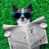 Dog newspaper Stock Photos