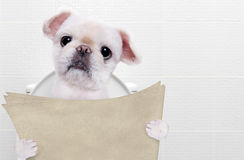 Dog with a newspaper in a toilet. Royalty Free Stock Photo