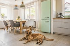 Dog next to dining table and chairs under lamps in house interio. R with pastel fridge. Real photo royalty free stock photography