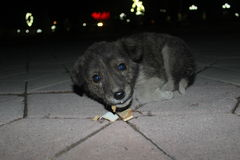 Dog. Night. Cool on the street. Homeless puppy Stock Image