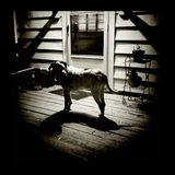 Dog at night. Dog on deck at night, lit by outdoor lightbulb Stock Photo