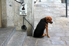 A dog with the No Dogs Allowed sign Royalty Free Stock Photography
