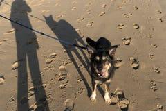 Dog on the North Frisian Island Amrum. In Germany Stock Photos
