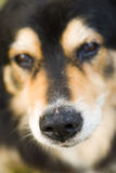 Dog nose royalty free stock images