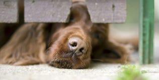 Dog nose banner Stock Image