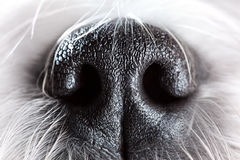 Dog nose close-up Royalty Free Stock Images