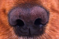 Dog Nose Stock Images
