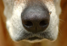 Dog nose closeup Stock Photo