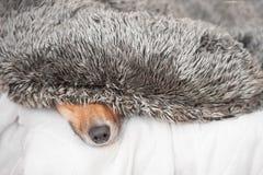 Dog nose closeup Royalty Free Stock Photos