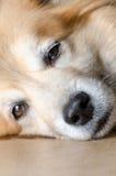 Dog Nose closeup. Closeup shot of a dog nose Stock Photos