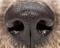 Dog Nose Extreme Closeup Stock Photo