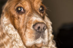 Dog nose macro Royalty Free Stock Photos