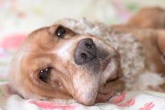 Dog nose macro detail close up Royalty Free Stock Photos