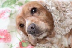 Dog nose macro detail close up Royalty Free Stock Photo