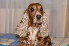 Dog nose macro detail close up Royalty Free Stock Image