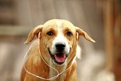 The dog. It is not a fierce Thai dog. Like other dogs Beautiful shape stock images