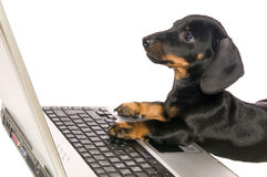 Dog with notebook. Black dog Lays with a notebook on white background isolated close up Stock Photo