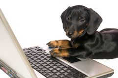 Dog with notebook. Black dog Lays with a notebook on white background isolated close up Royalty Free Stock Photo