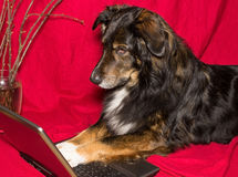 Dog with a notebook. Dog is interestet in a notebook Royalty Free Stock Image