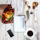 Dog with notebook, phone and coffee. Notebook with pen for planning. Coffee, phone, flowers and dog Stock Image
