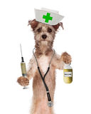 Dog Nurse Shot and Vaccine Bottle Stock Photos