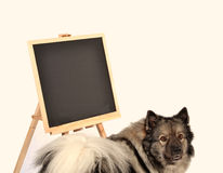 Dog obedience school board school Stock Photos