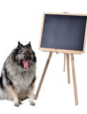 Dog obedience school board school Stock Image