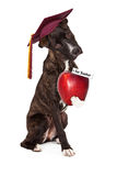Dog Obedience School Graduate Royalty Free Stock Photography