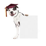 Dog Obedience School Graduate Holding Blank Sign Royalty Free Stock Image