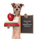 Dog Obedience School Teacher. Funny image of dog holding books on animal training, an apple for teacher and sign saying welcome to obedience school Royalty Free Stock Image