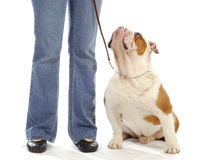 Dog obedience training Stock Photo